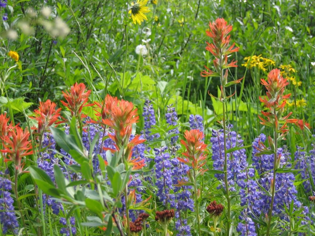 Summer Flowers in Crested Butte